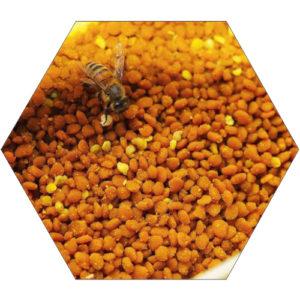 Pyłek kwiatowy ( obnóża pyłkowe )